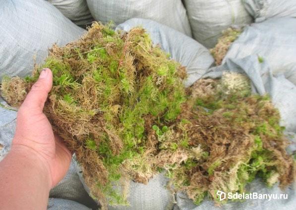 Строительный мох
